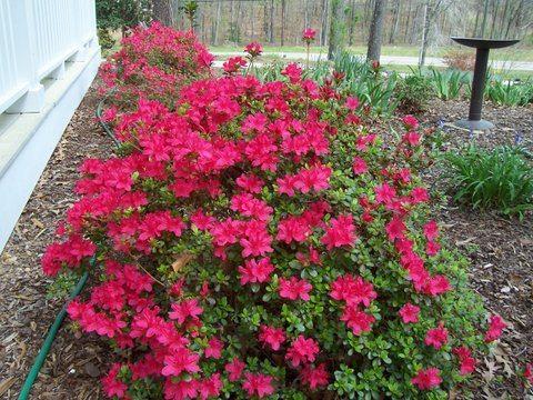April Gardening Activities