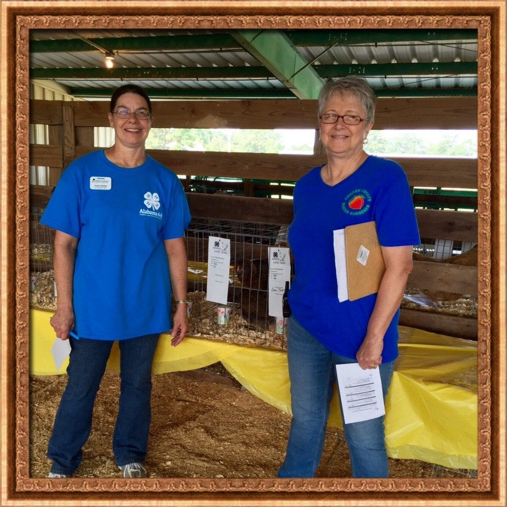 Jo and Pat at chicken show