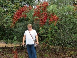 Paula and pyracantha with orange red berries