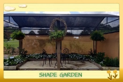 Shade Garden in Demo Garden