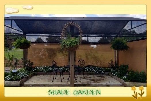 Shade Garden in Demo Garden