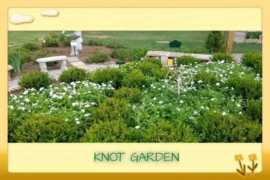 Knot Garden in Demo Garden green shrubs and white flowers