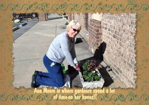 Ann Moore planting pansies
