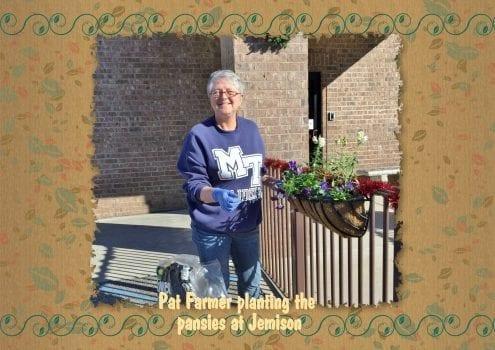 pat Farmer planting pansies
