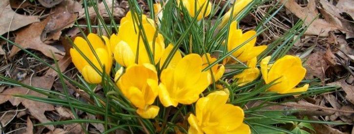 February Gardening Activities