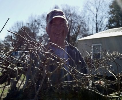 Master Gardener prunning grapes