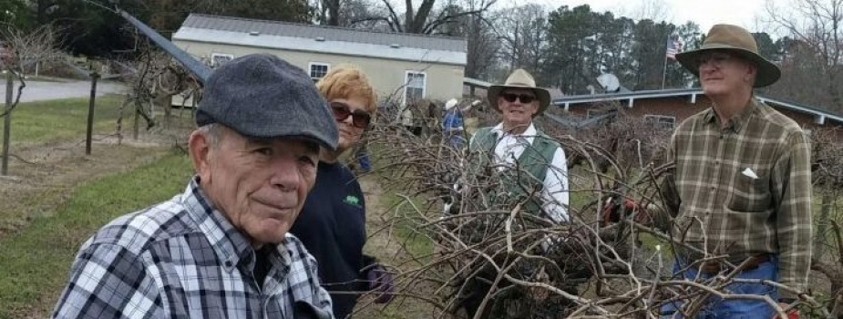 Fruit Workshop and Grape Pruning