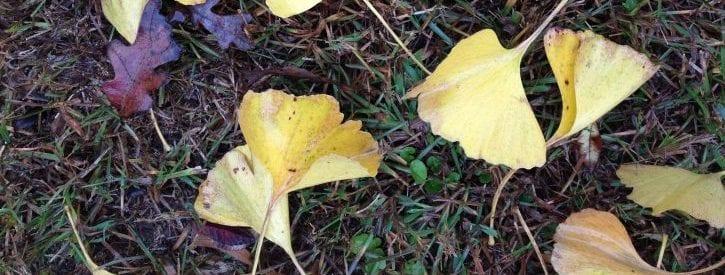 November Gardening Activities