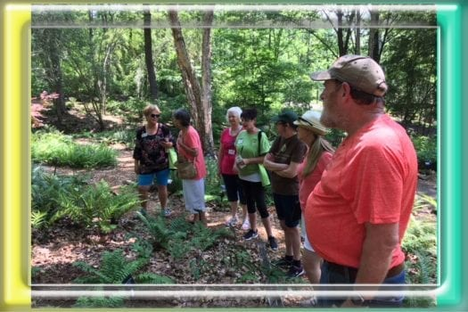 Tour guide talking to Master Gardeners about the ferns at Botanical gardens