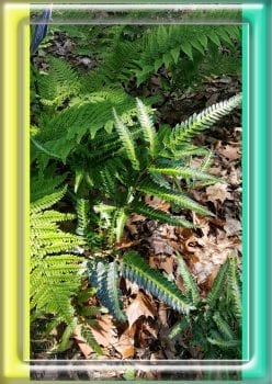 Ferns At BBG
