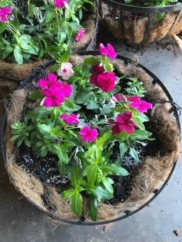 Basket of fushia periwinkle
