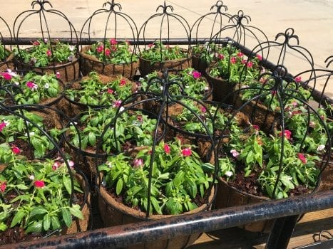 Flower baskets to hang in Jemison