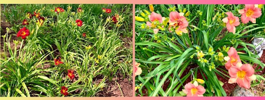 June Gardening Activities