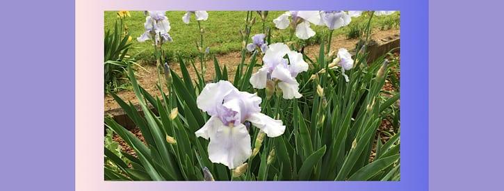 May Gardening Activities