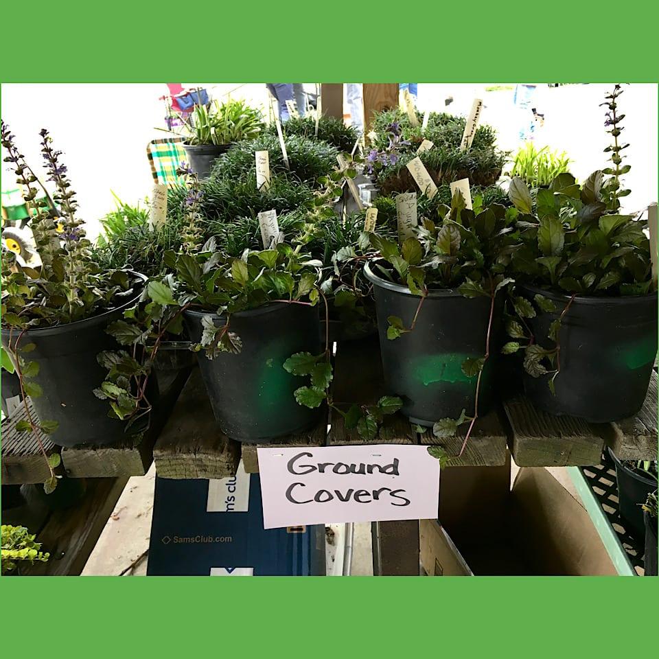 Plants for sale at plant sale