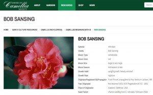Bob Sansing