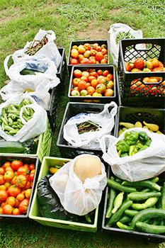 crates full of harvested vegetables; tomatoes, cucumbers, bell peppers, squash, and beans
