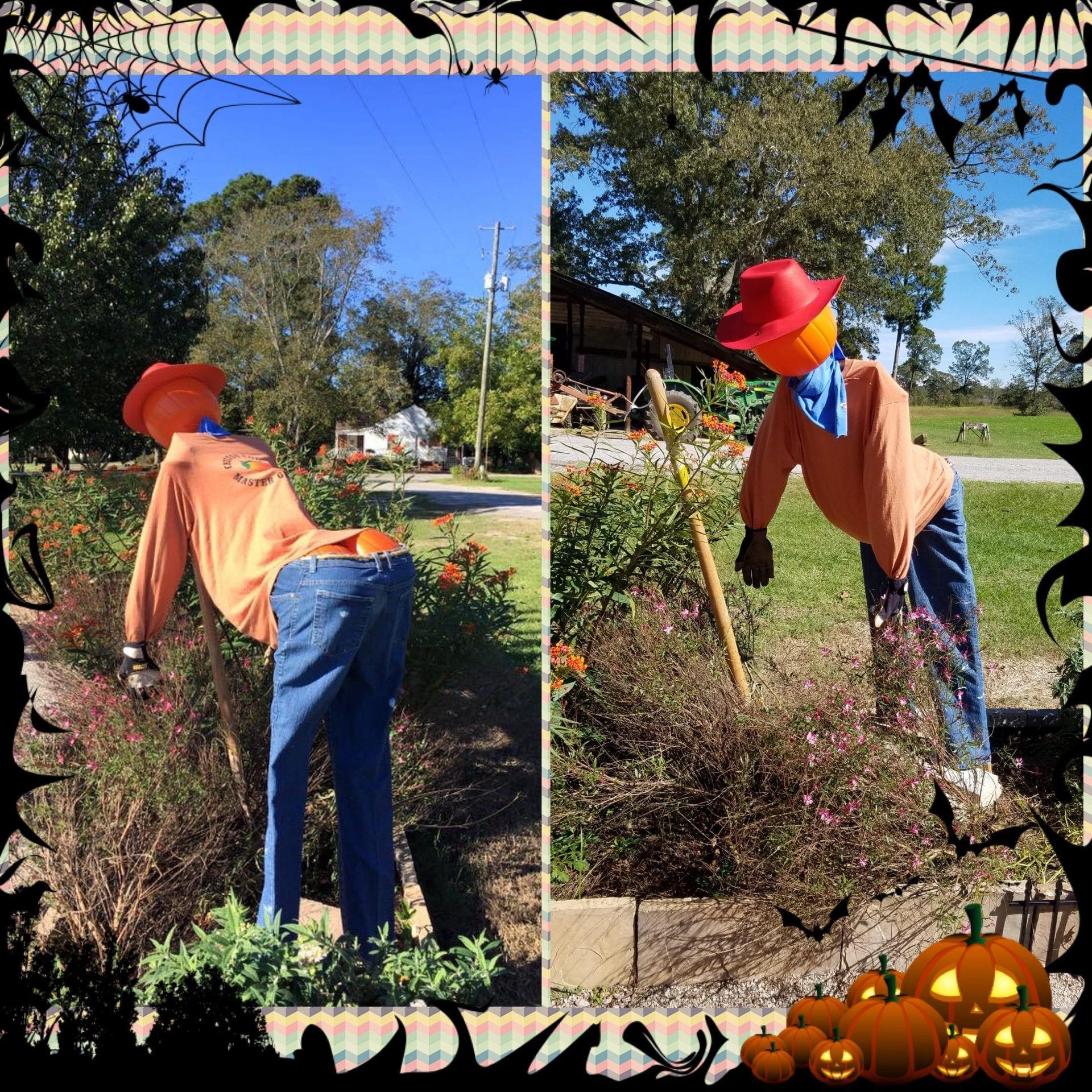 Scarecrow in Demo Garden