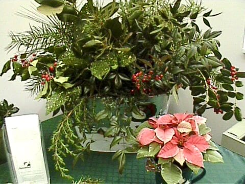 several types of fresh greenery