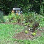 an evolving caterpillar garden