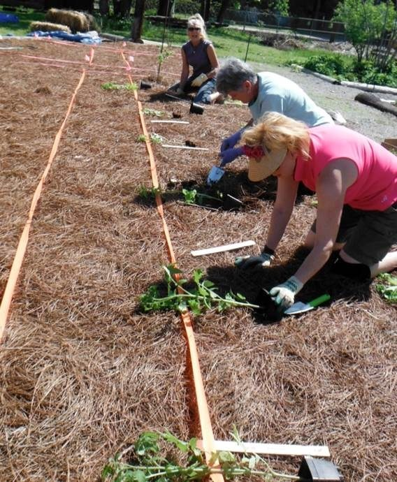 sloss Furnace planting day